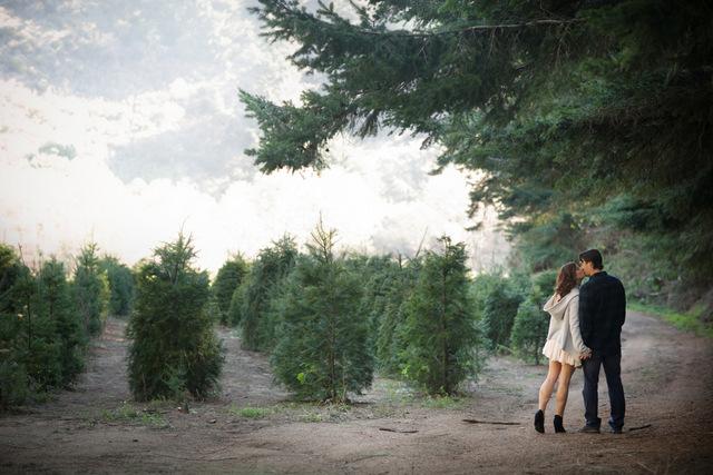 Christmas Tree Farm Anniversary Shoot   Britt Renee Photo   Oh Lovely Day